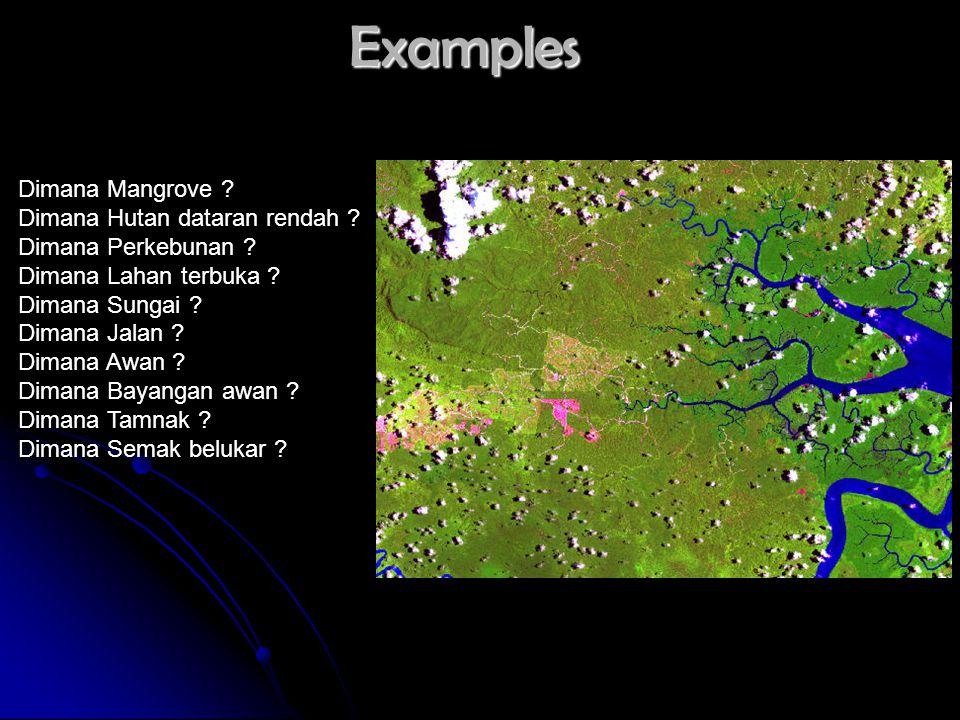 Examples Dimana Mangrove Dimana Hutan dataran rendah