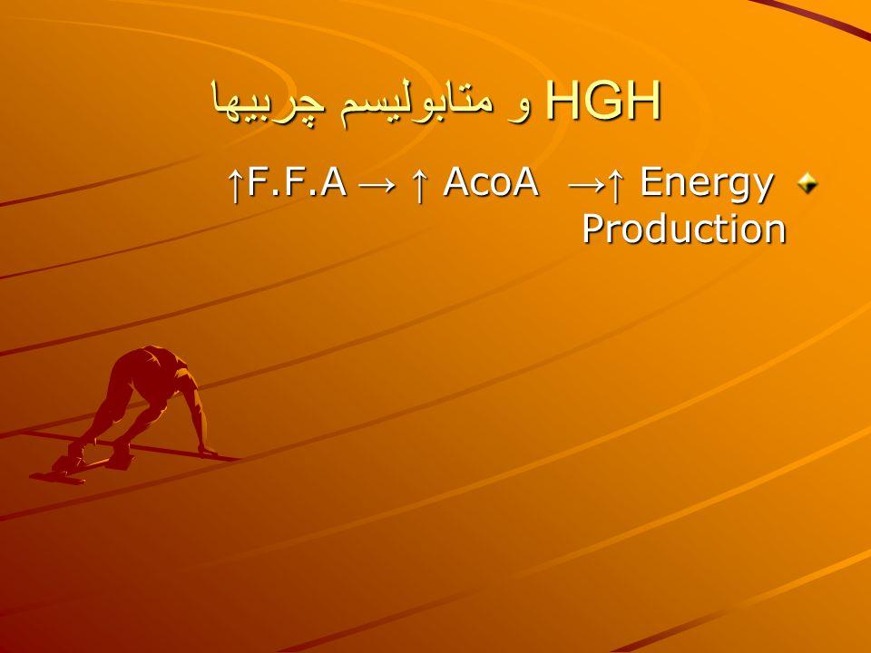 HGH و متابوليسم چربيها ↑F.F.A → ↑ AcoA →↑ Energy Production