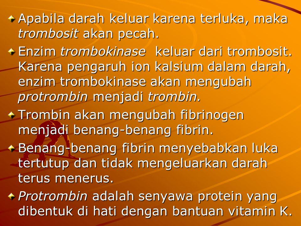 Apabila darah keluar karena terluka, maka trombosit akan pecah.