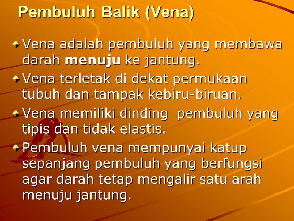 Pembuluh Balik (Vena) Vena adalah pembuluh yang membawa darah menuju ke jantung. Vena terletak di dekat permukaan tubuh dan tampak kebiru-biruan.