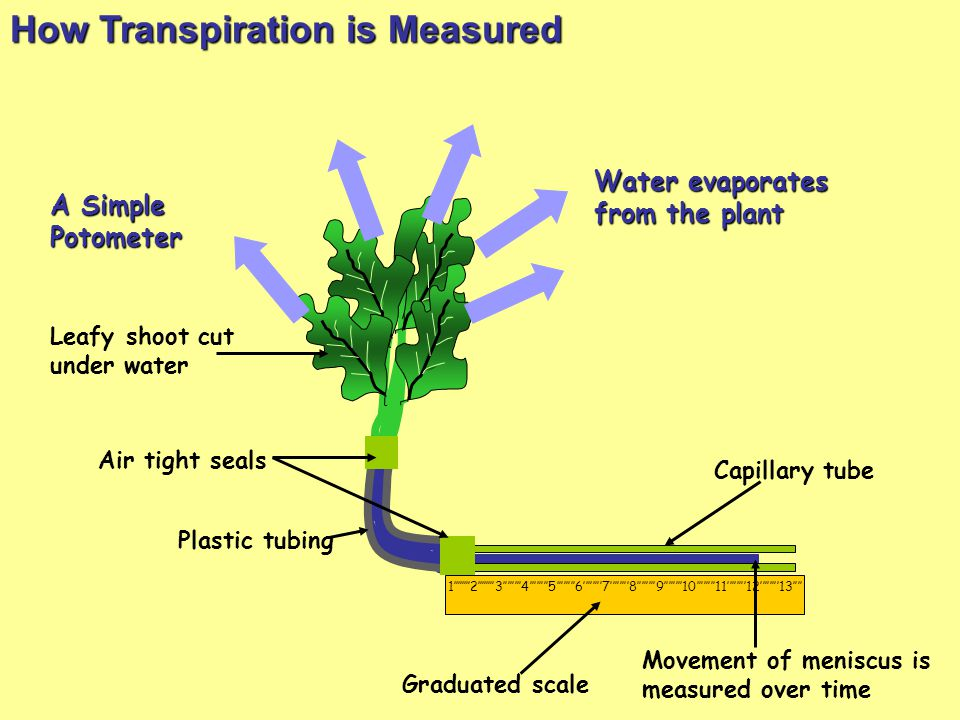 How Transpiration is Measured