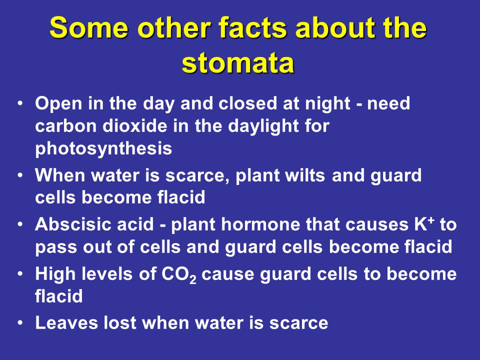 Some other facts about the stomata