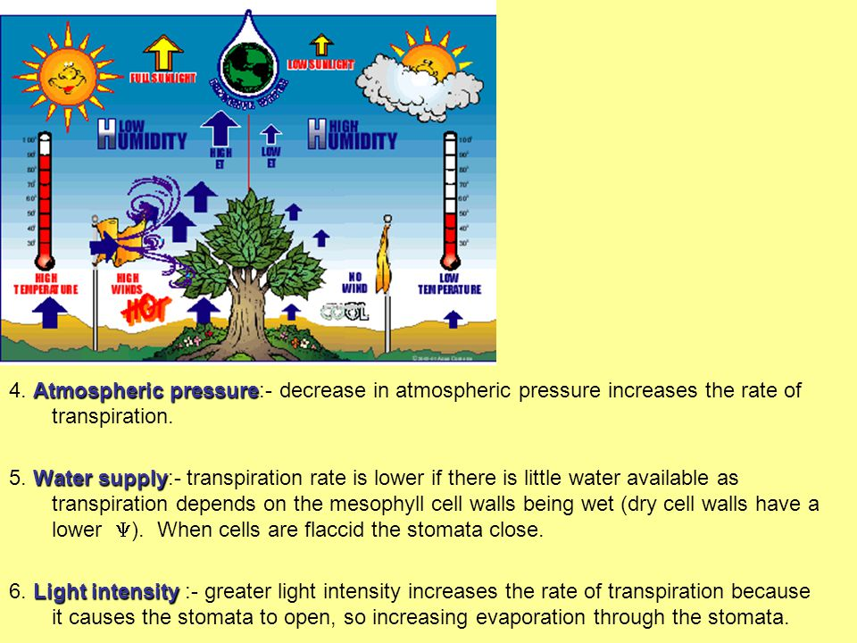 4. Atmospheric pressure:- decrease in atmospheric pressure increases the rate of transpiration.