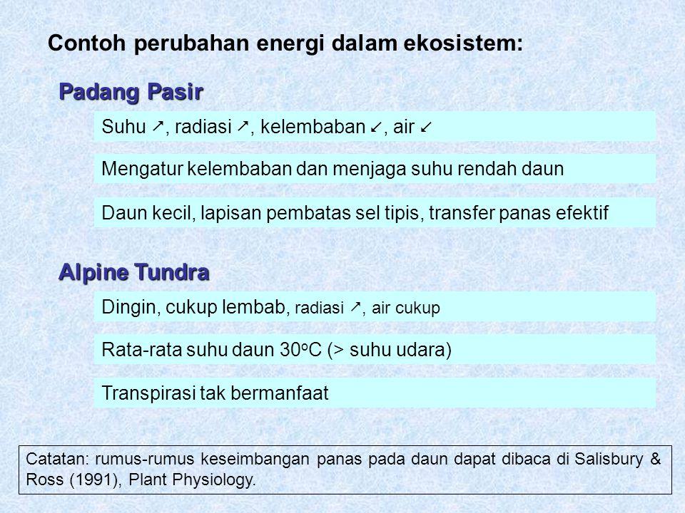 Contoh perubahan energi dalam ekosistem: