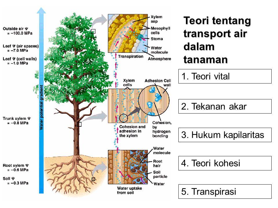 Teori tentang transport air dalam tanaman