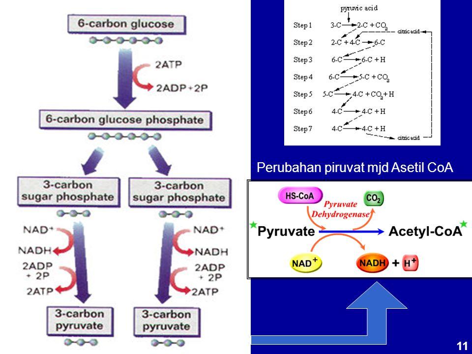 Perubahan piruvat mjd Asetil CoA