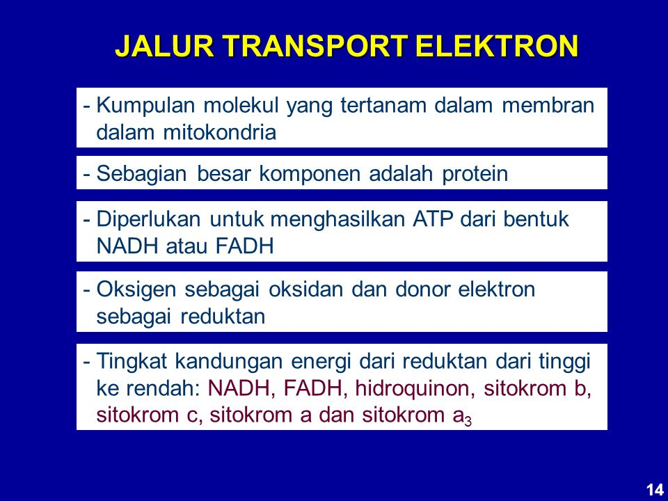 JALUR TRANSPORT ELEKTRON