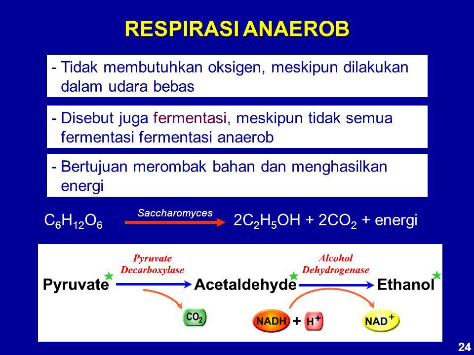 RESPIRASI ANAEROB - Tidak membutuhkan oksigen, meskipun dilakukan dalam udara bebas.