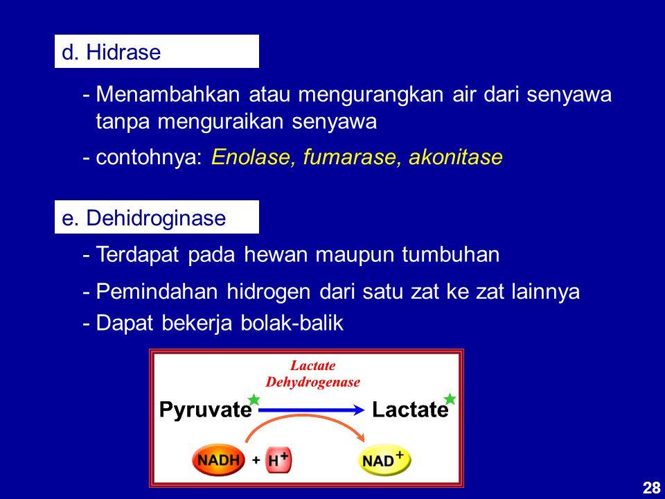 - contohnya: Enolase, fumarase, akonitase