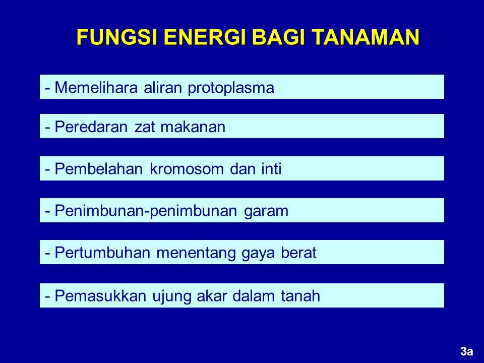 FUNGSI ENERGI BAGI TANAMAN