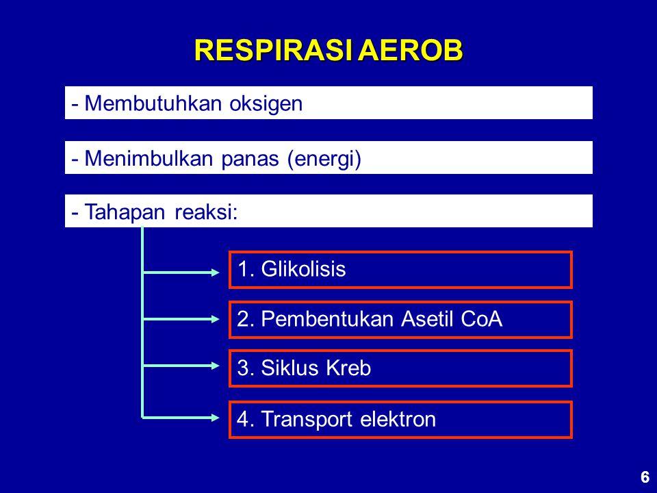 RESPIRASI AEROB - Membutuhkan oksigen - Menimbulkan panas (energi)