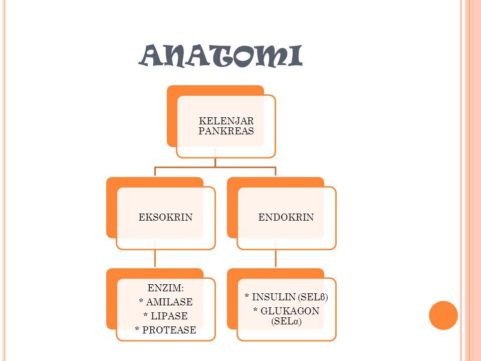 ANATOMI KELENJAR PANKREAS EKSOKRIN * PROTEASE * AMILASE ENZIM: