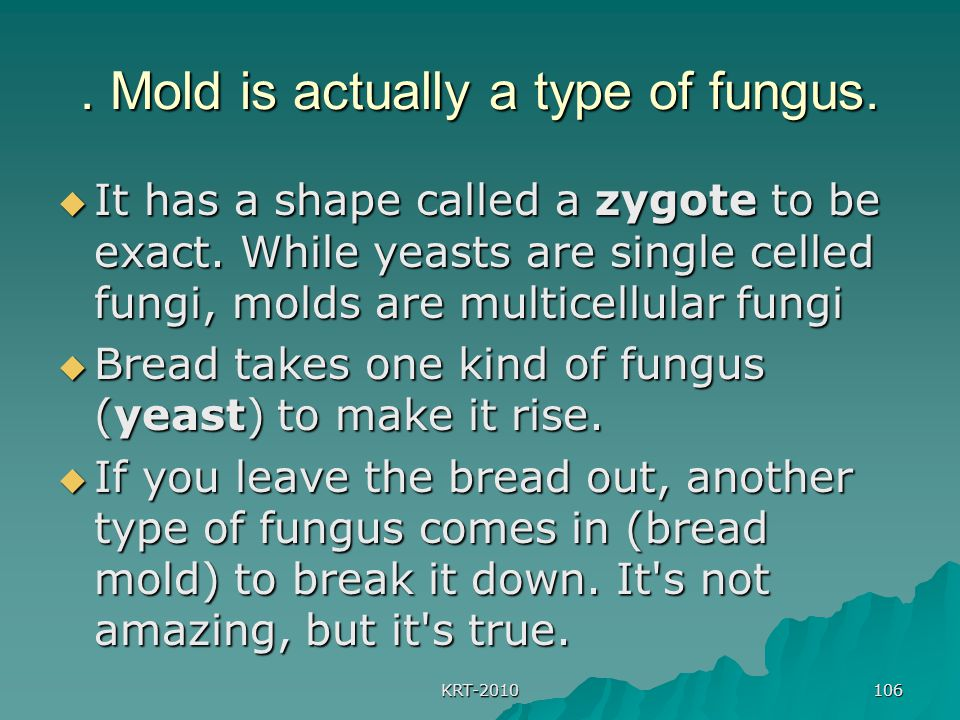 . Mold is actually a type of fungus.