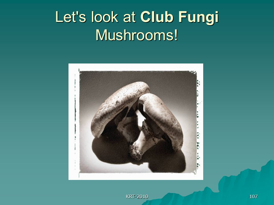 Let s look at Club Fungi Mushrooms!