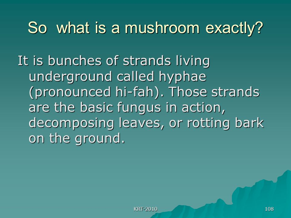 So what is a mushroom exactly
