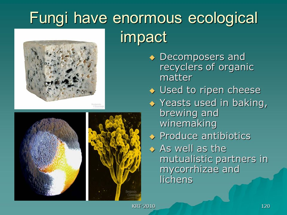 Fungi have enormous ecological impact