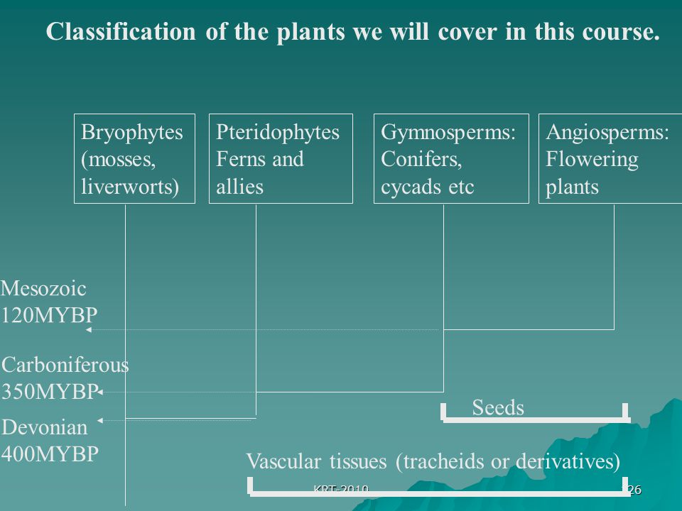 Classification of the plants we will cover in this course.
