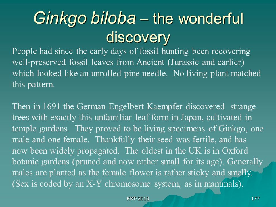 Ginkgo biloba – the wonderful discovery