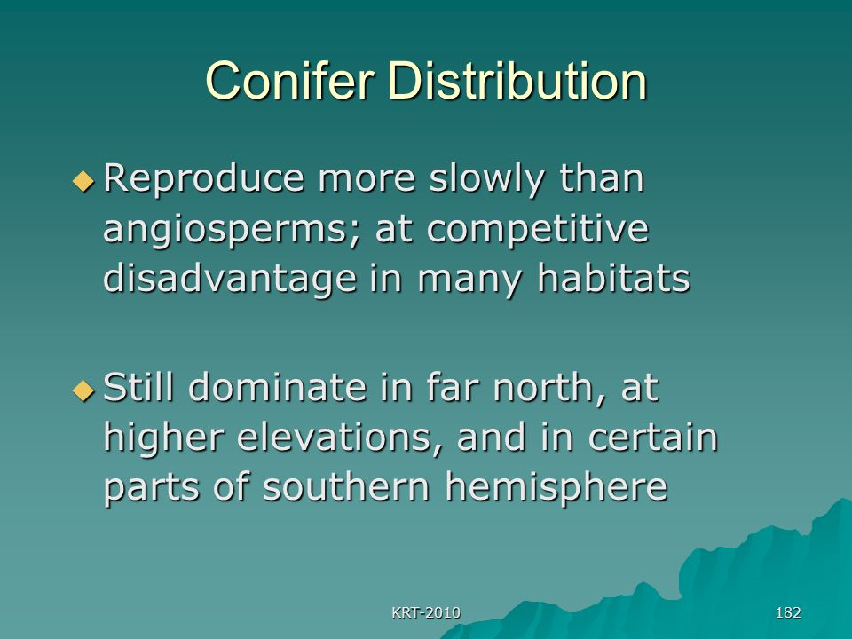 Conifer Distribution Reproduce more slowly than angiosperms; at competitive disadvantage in many habitats.