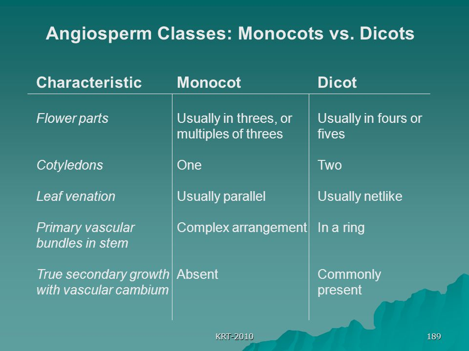 Angiosperm Classes: Monocots vs. Dicots