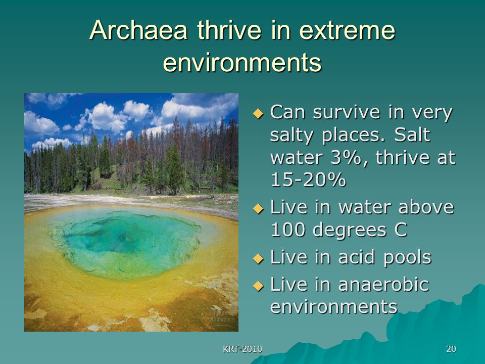 Archaea thrive in extreme environments