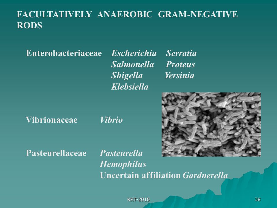 FACULTATIVELY ANAEROBIC GRAM-NEGATIVE RODS