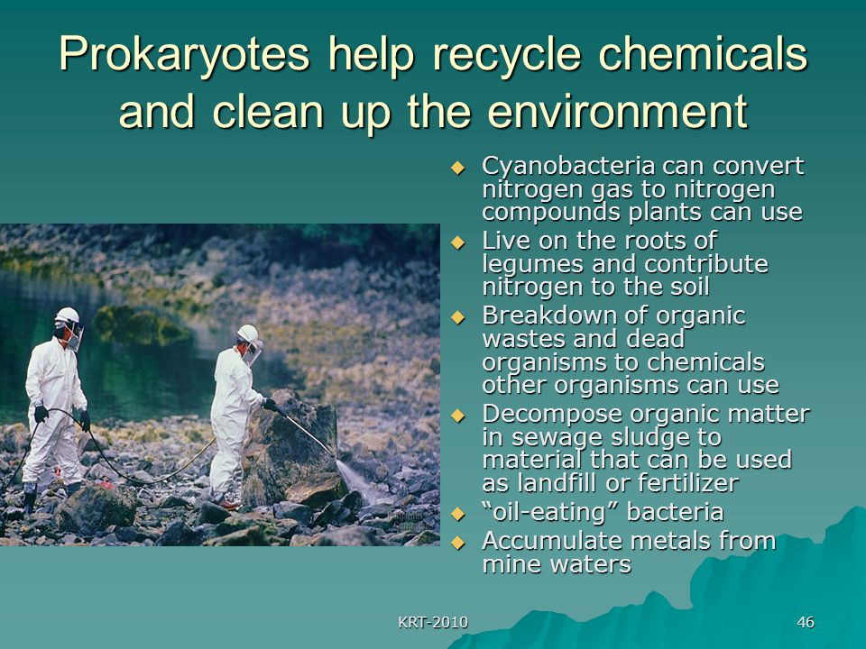 Prokaryotes help recycle chemicals and clean up the environment