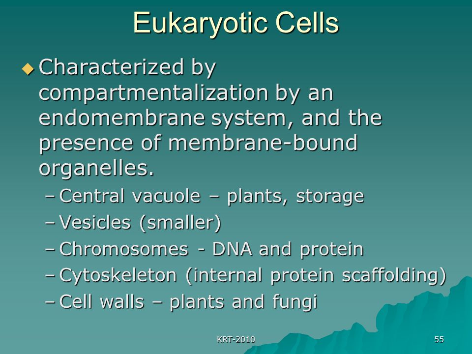 Eukaryotic Cells Characterized by compartmentalization by an endomembrane system, and the presence of membrane-bound organelles.