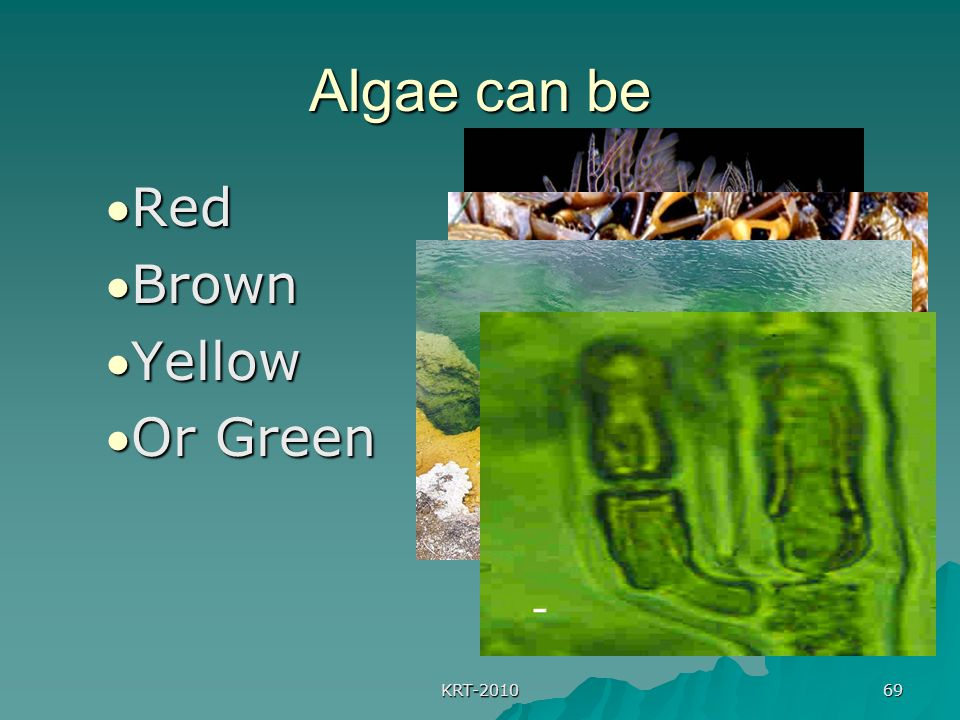 Algae can be Red Brown Yellow Or Green KRT-2010