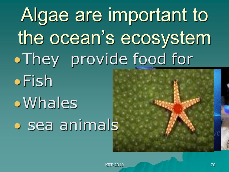Algae are important to the ocean's ecosystem