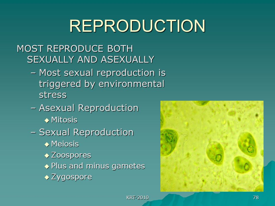 REPRODUCTION MOST REPRODUCE BOTH SEXUALLY AND ASEXUALLY