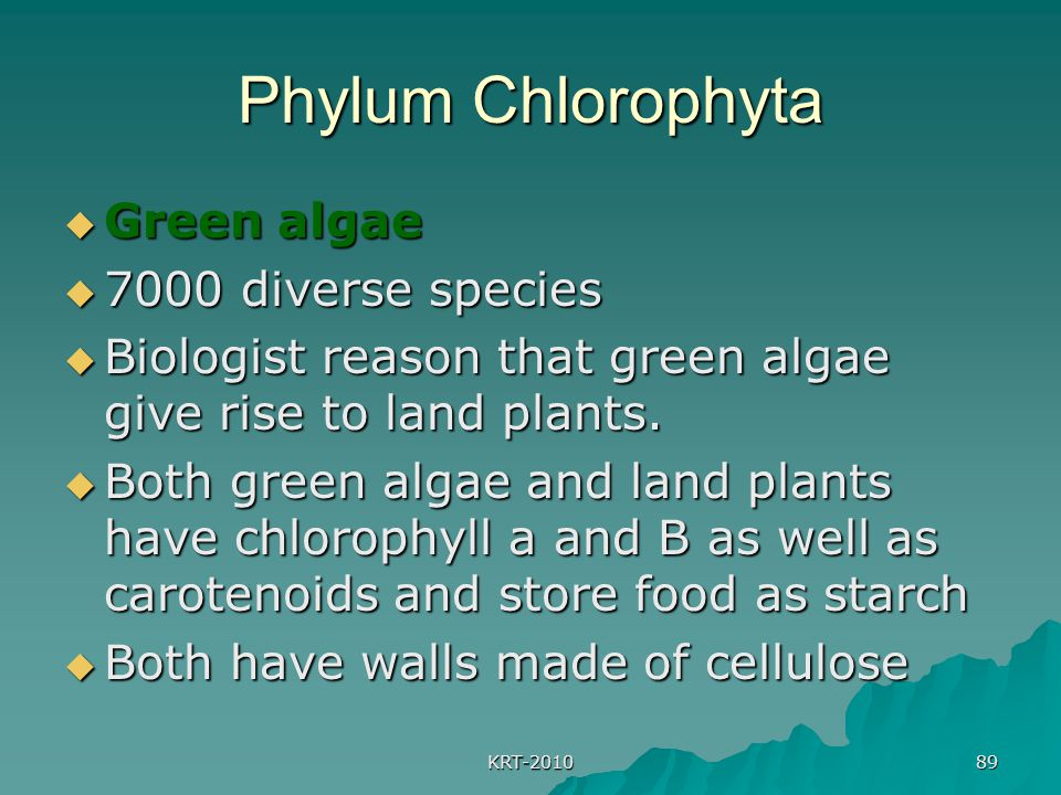 Phylum Chlorophyta Green algae 7000 diverse species