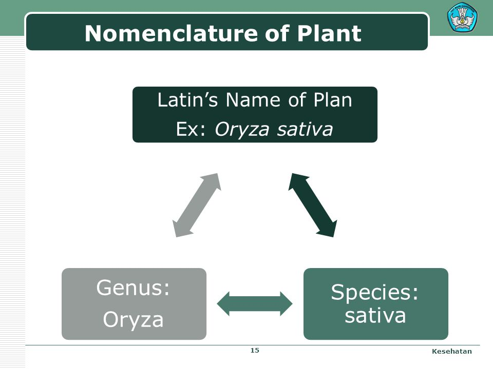 Nomenclature of Plant Latin's Name of Plan Ex: Oryza sativa