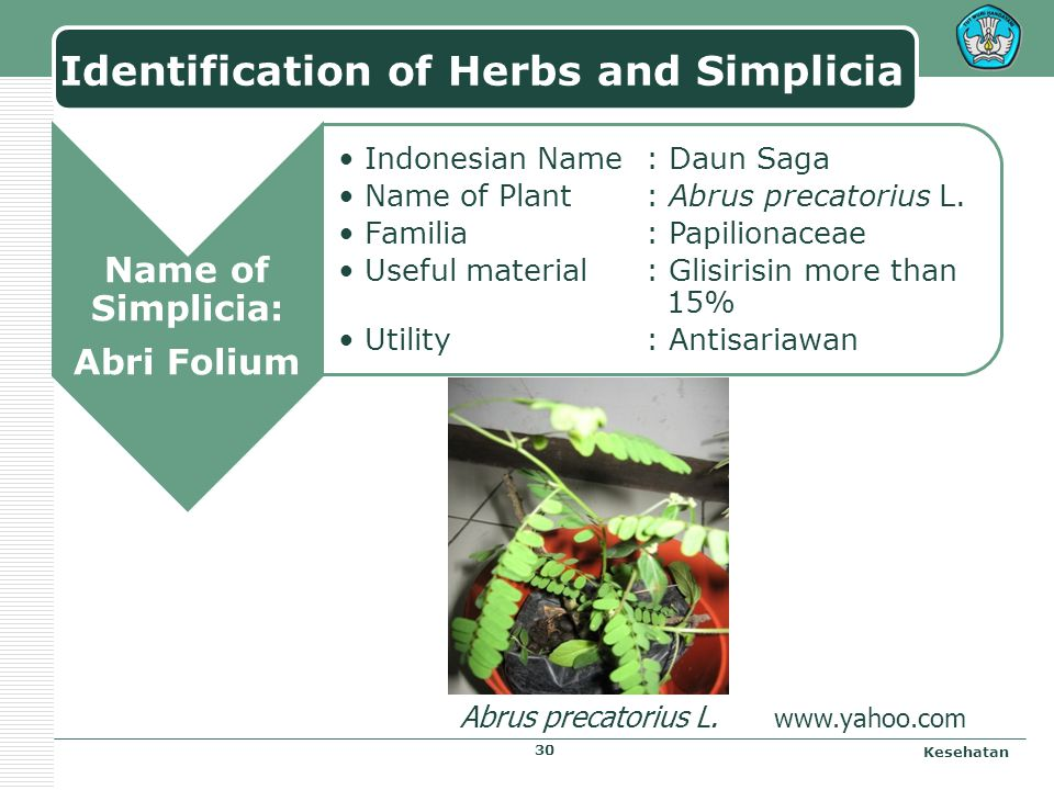 Identification of Herbs and Simplicia