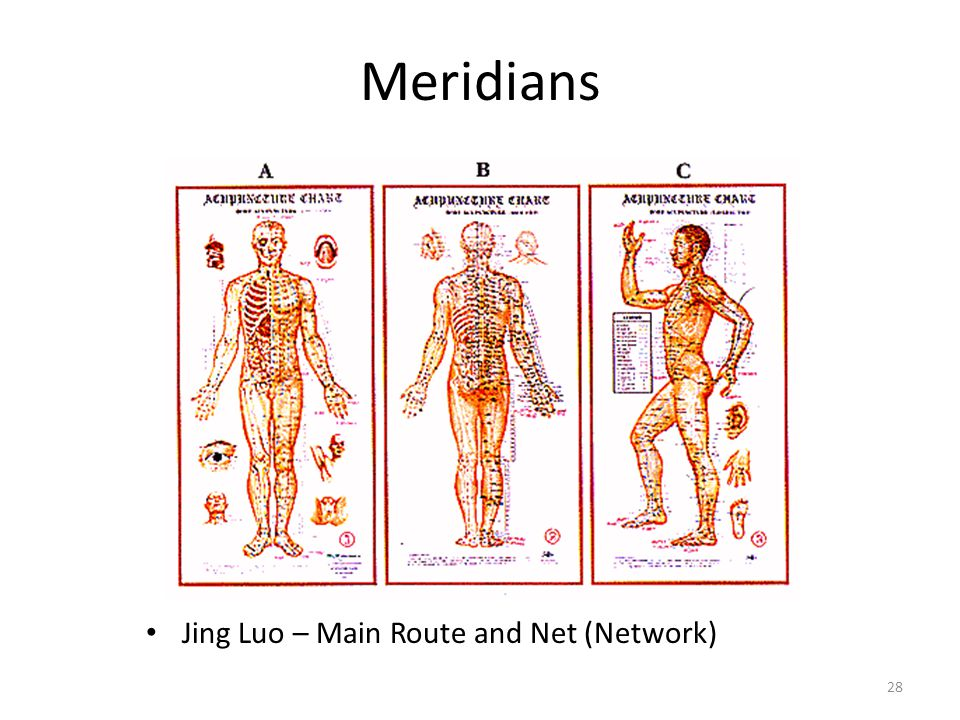 Meridians Jing Luo – Main Route and Net (Network)