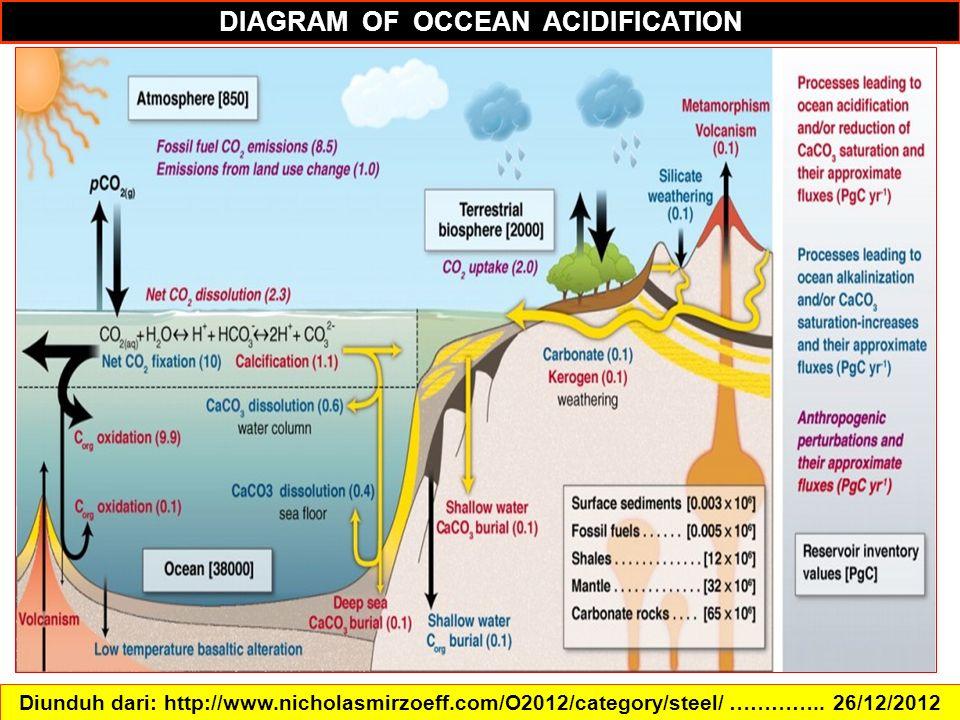 DIAGRAM OF OCCEAN ACIDIFICATION