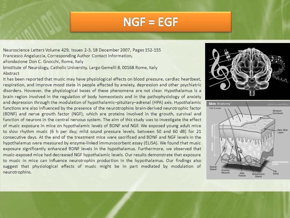 NGF = EGF Neuroscience Letters Volume 429, Issues 2-3, 18 December 2007, Pages 152-155.