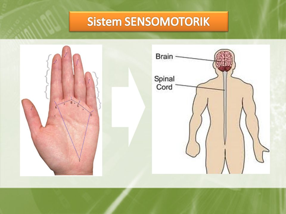 Sistem SENSOMOTORIK