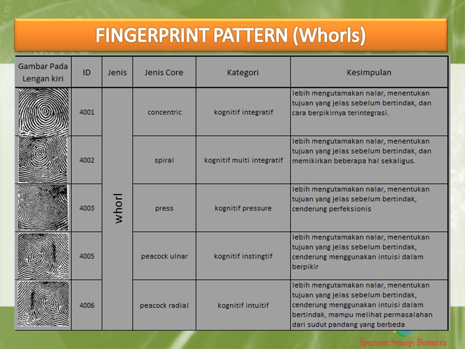 FINGERPRINT PATTERN (Whorls)