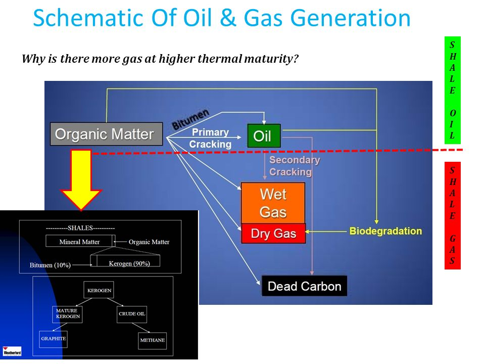 Schematic Of Oil & Gas Generation