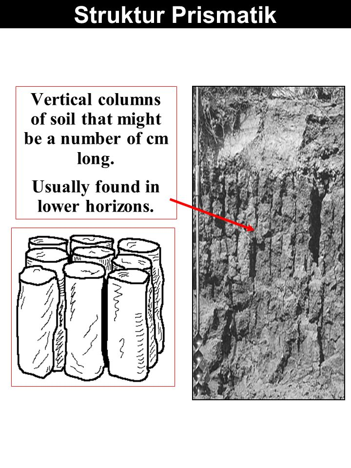 Struktur Prismatik Vertical columns of soil that might be a number of cm long. Usually found in lower horizons.