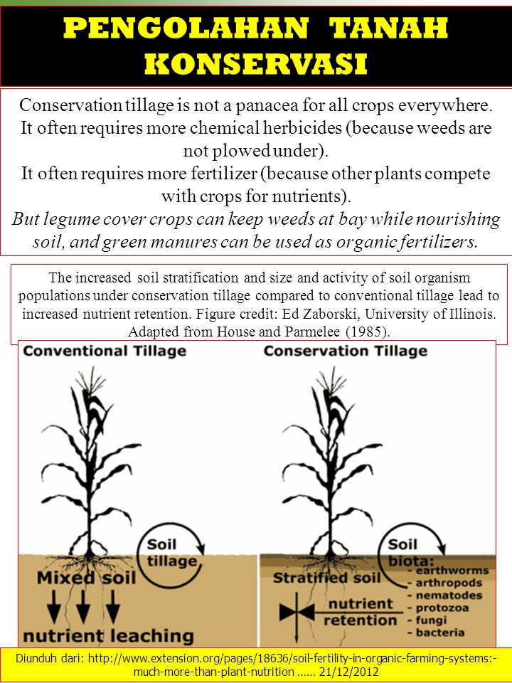 Conservation tillage is not a panacea for all crops everywhere.
