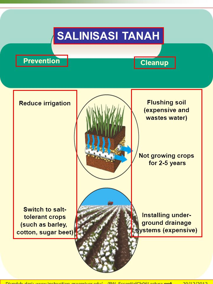 SALINISASI TANAH Prevention Cleanup Reduce irrigation Flushing soil