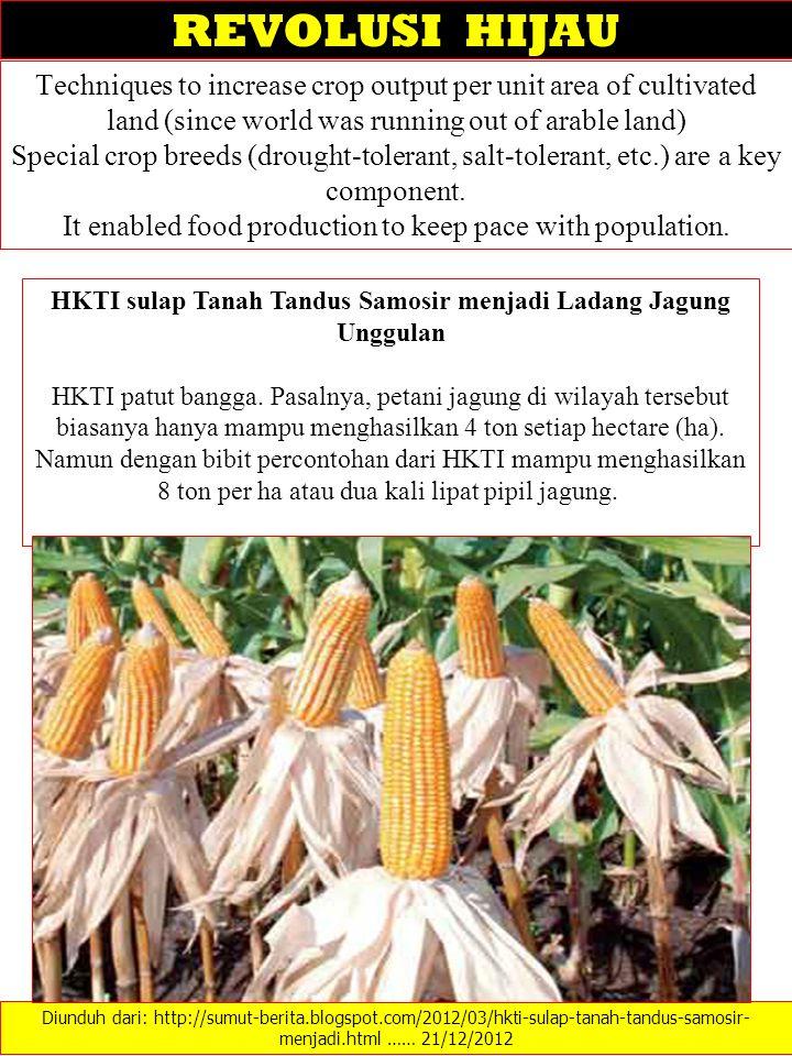 HKTI sulap Tanah Tandus Samosir menjadi Ladang Jagung Unggulan