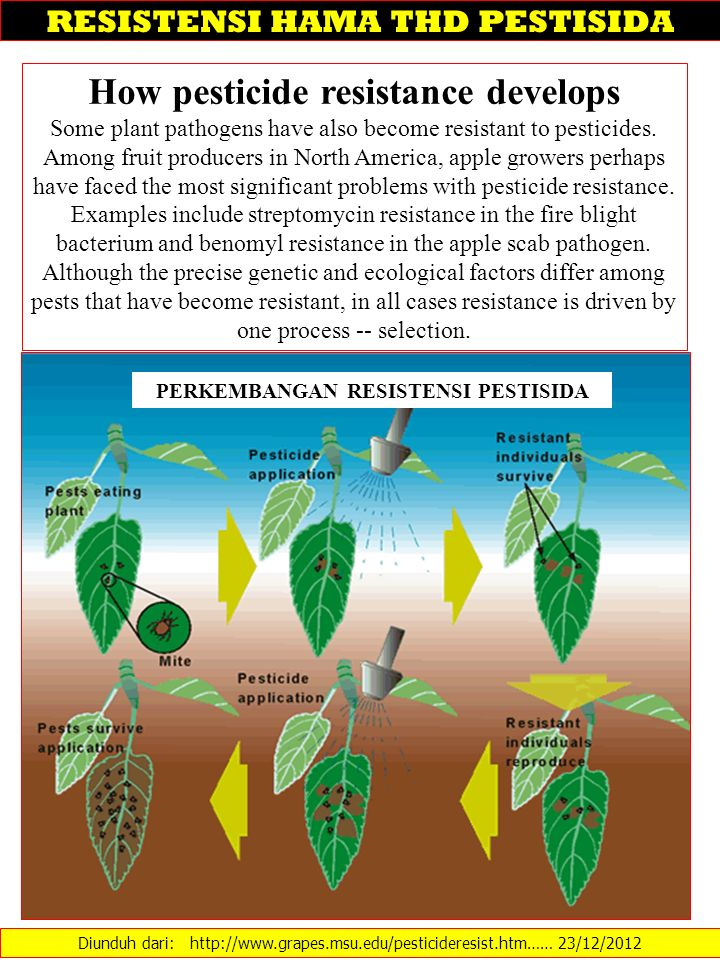 How pesticide resistance develops