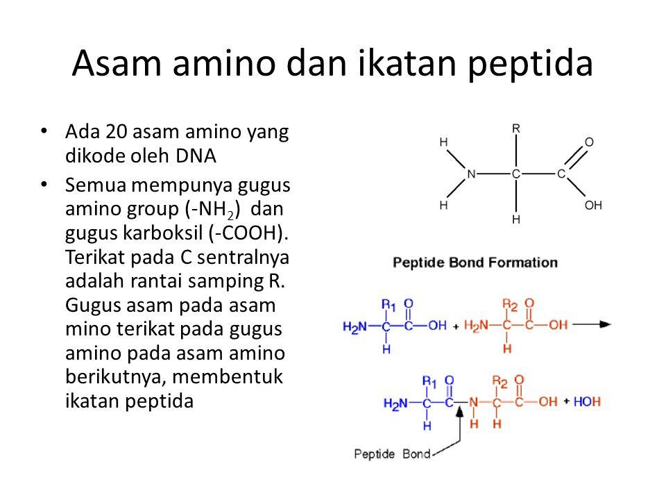 Asam amino dan ikatan peptida