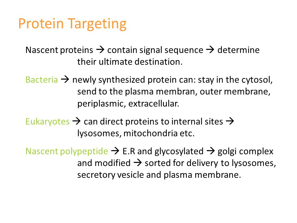 Protein Targeting Nascent proteins  contain signal sequence  determine their ultimate destination.