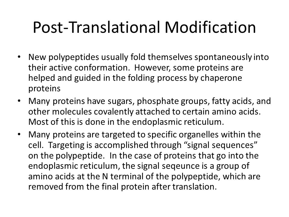Post-Translational Modification