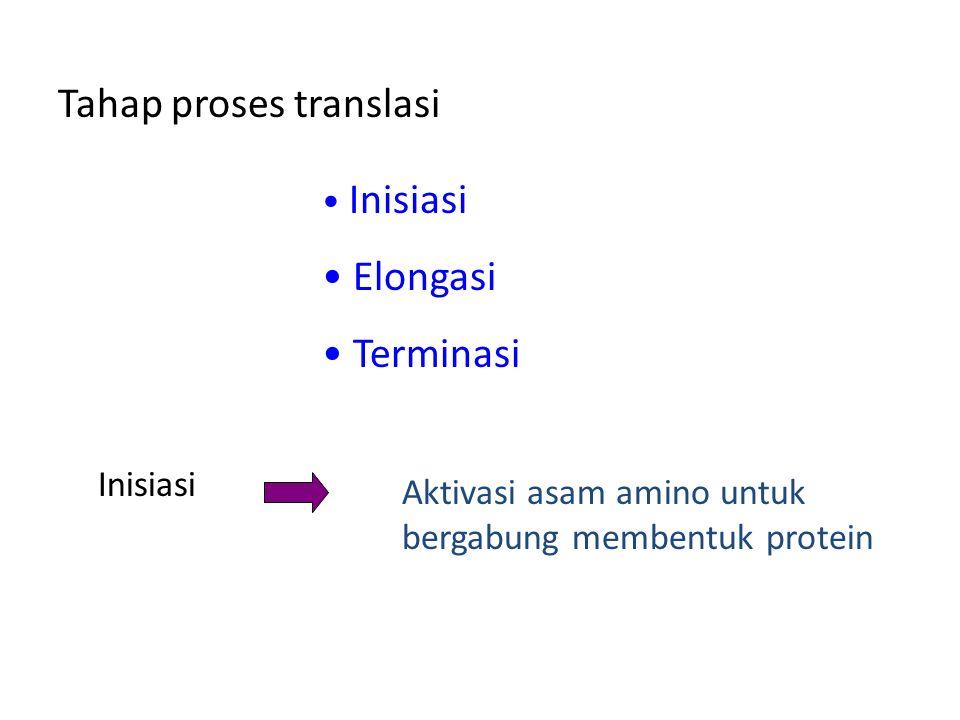 Tahap proses translasi
