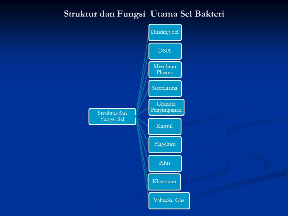 Struktur dan Fungsi Utama Sel Bakteri